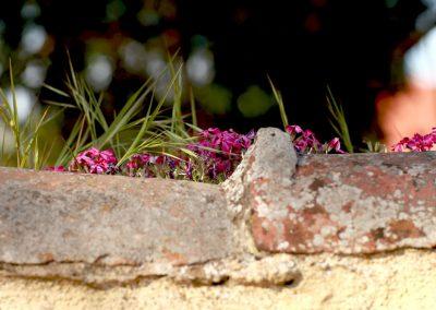 Blumen_auf_Mauer